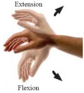 Comment renforcer mon bras d'arc