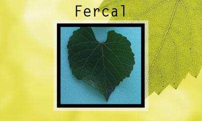 Fercal