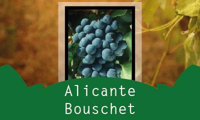 Alicante Bouschet