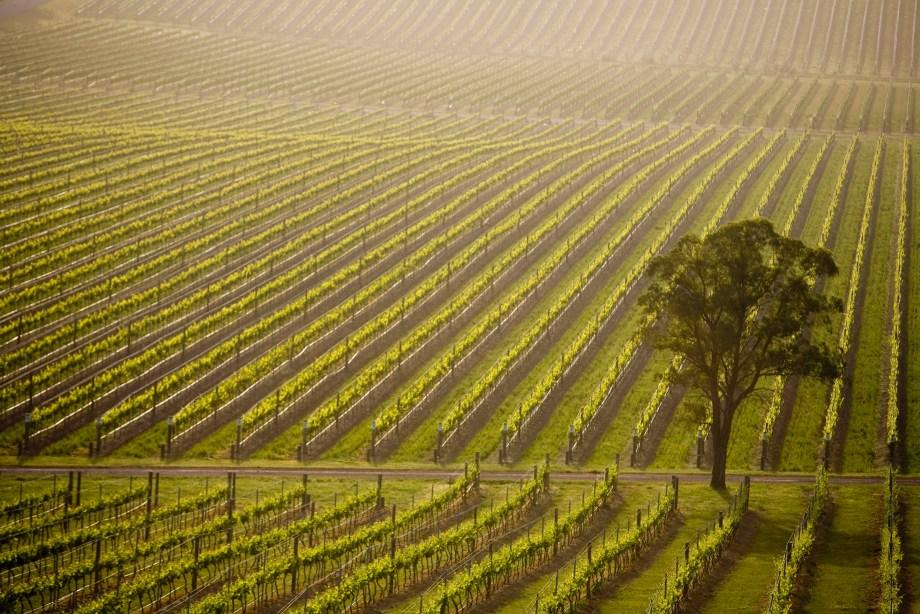De Bortoli Vines at Dixons Creek in Victoria's Yarra Valley
