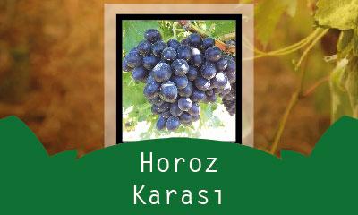Horoz Karası