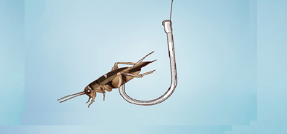 The Fish Bait Acquisition Construct
