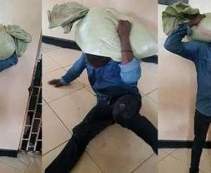 This Stolen Bag Will Not Come Down Despite All Efforts [Hello Isaac Newton]