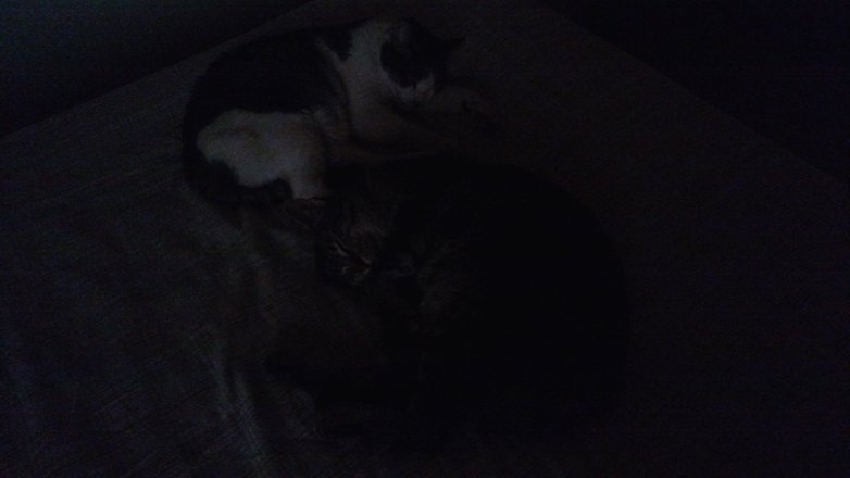 gatos-maxx-w782