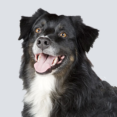 Barkbath Research Team Dog Lyla