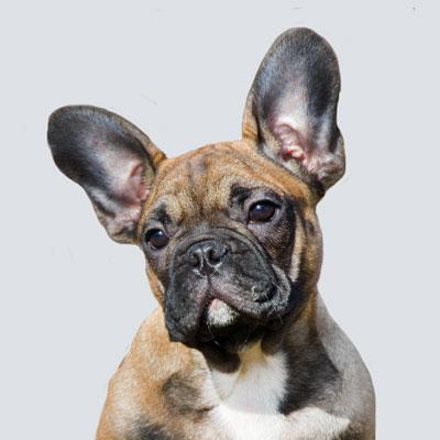 Barkbath Research Team Dog Frank