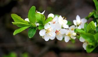Bitkiler Ne Zaman Çiçek Açacaklarına Nasıl Karar Veriyor?