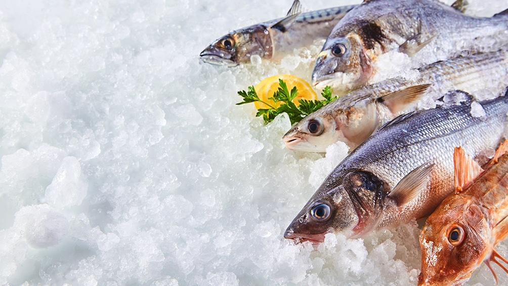 """En el 100% de los ejemplares de peces analizados """"se detectaron antibióticos (ATBs) de las familias de macrólidos, tetraciclinas y fluoroquinolonas""""."""