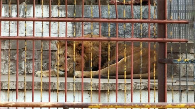 La ley enfrenta el rico lobby de la cría de grandes animales.