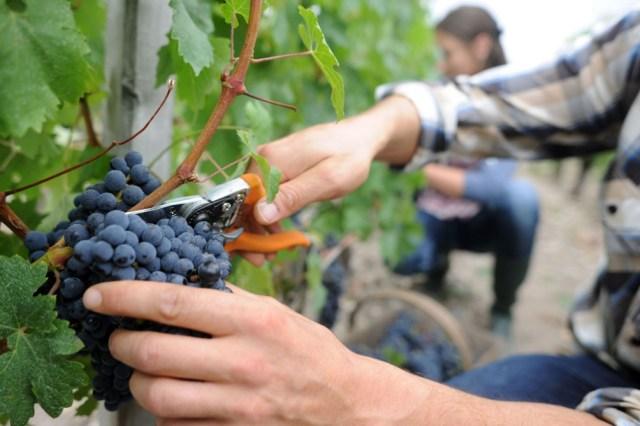 Si bien Mendoza explica el 70% de la producción del vino a nivel nacional, cada vez hay más grandes vinos de diferentes terruños.