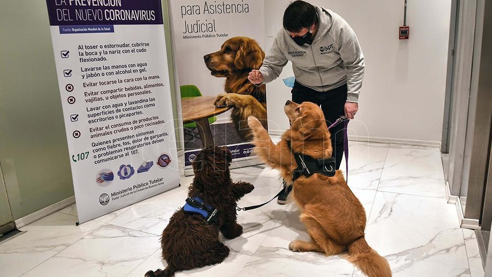 Los perros tienen como objetivo contribuir a un contexto de contención previo a una declaración.
