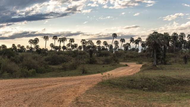 El Parque Nacional El Palmar, en Colón, otro de los atractivos provinciales, a la vera de la Ruta Nacional 14.