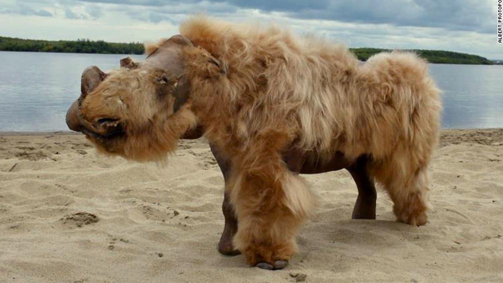 Hallan un rinoceronte lanudo congelado hace 20.000 años