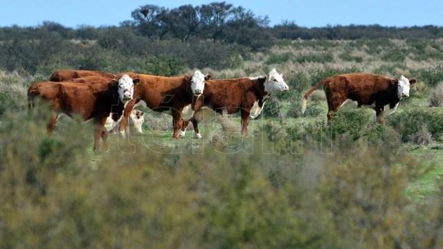 El sector no prevé un aumento en la demanda interna de carne para los próximos meses.