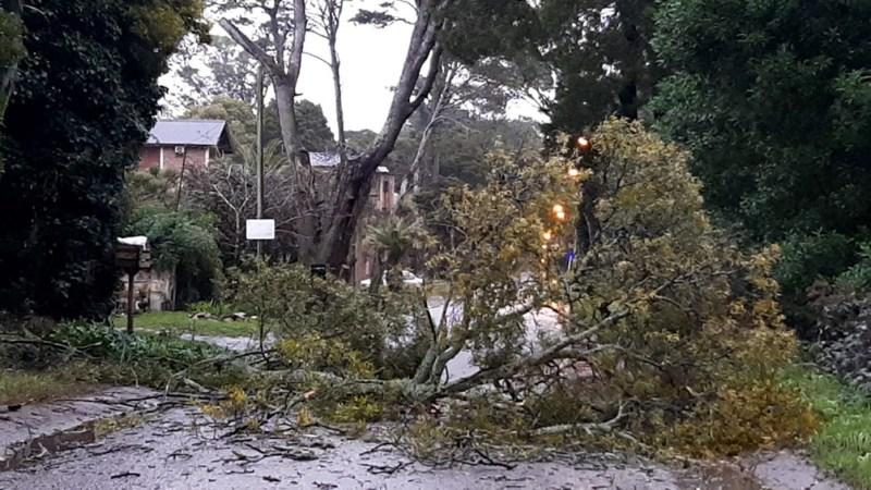 El temporal se sintió en Pinamar, Cariló, Ostende, Valeria del Mar, Villa Gesell, Mar de las Pampas y Mar Azul.