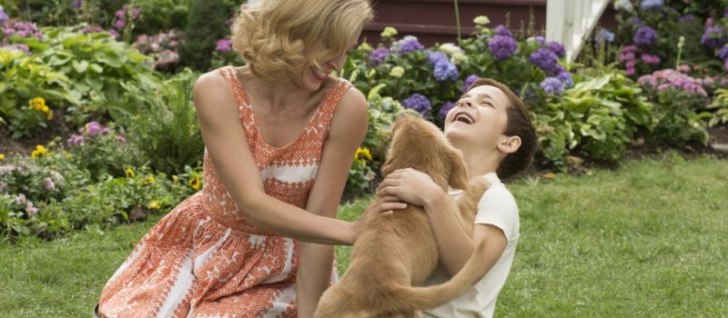 Infinity - A DOG'S PURPOSE - Qua la zampa