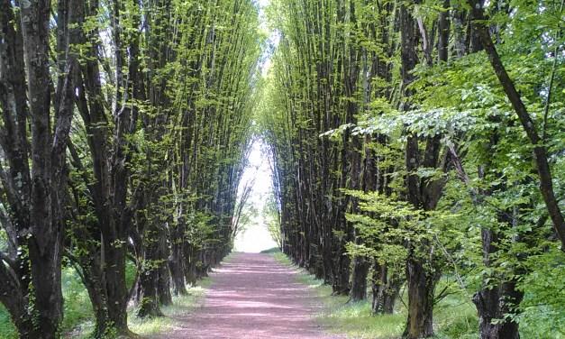 La camminata non competitiva di 'DonnaeSalute' torna al Parco di S. Rossore per la seconda edizione