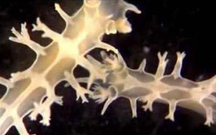 A new species of sea slug