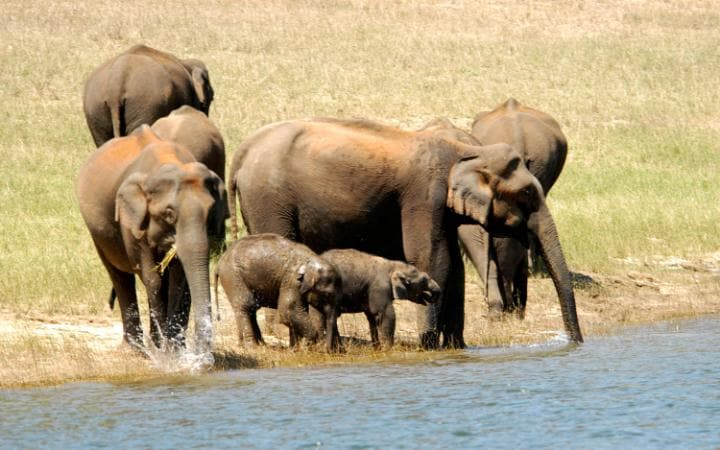 Wild elephants at the water's edge
