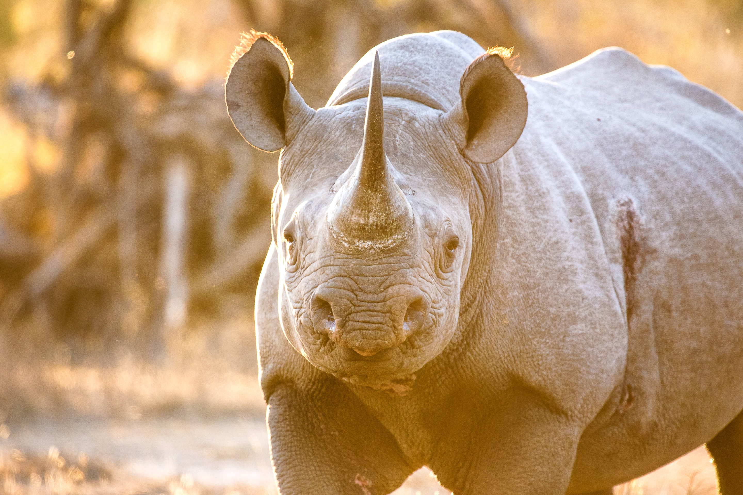 A kaleidoscope of wildlife roams freely between Kruger and neighbouring private reserves