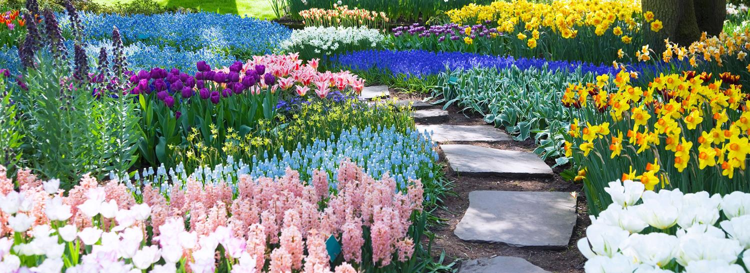 A colourful floral-lined path in the sunshine