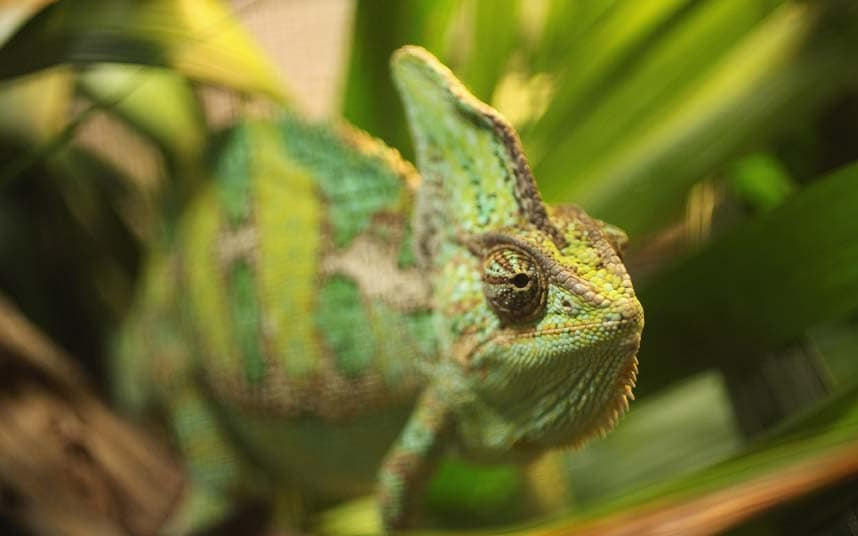 Chameleon | The strangest - & stupidest - items confiscated at airports -  Travel