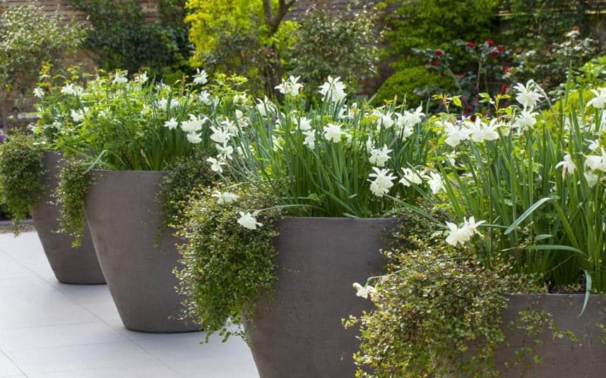 How To Use Containers In Your Garden The Telegraph