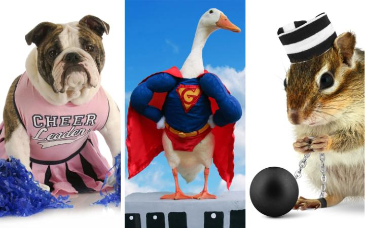 A dog in a cheerleader outfit, a goose in a superman outfit and a chipmunk dressed as a convict