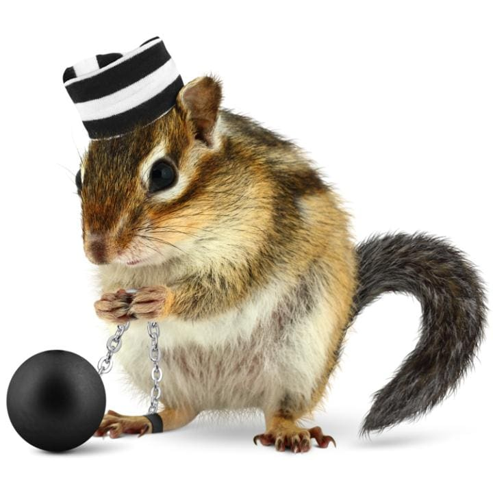 A chipmunk wearing a convict's hat and ball and chain