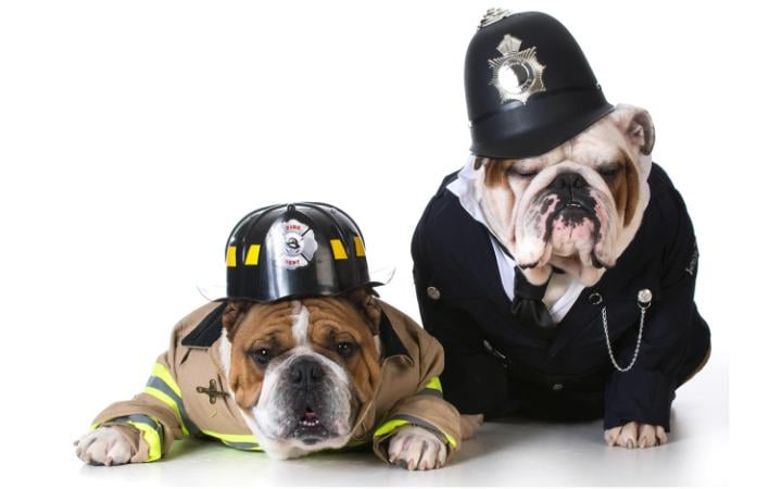Two dogs dressed up as a fireman and policeman