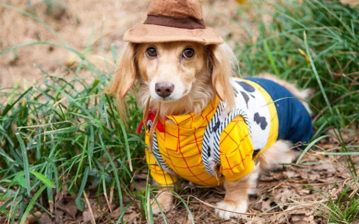 A dog wearing a Woody from Toy Story outfit