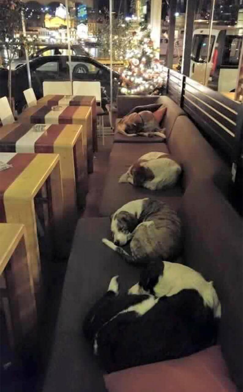Dogs sleeping in the Hott Spott café in Mytilene on the Greek island of Lesbos