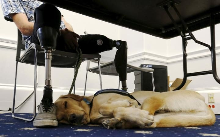 Dogs can have huge benefits for soldiers injured in combat