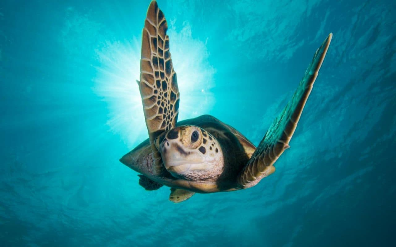 Blue Planet Ii Episode Highlights How Plastic Is Killing