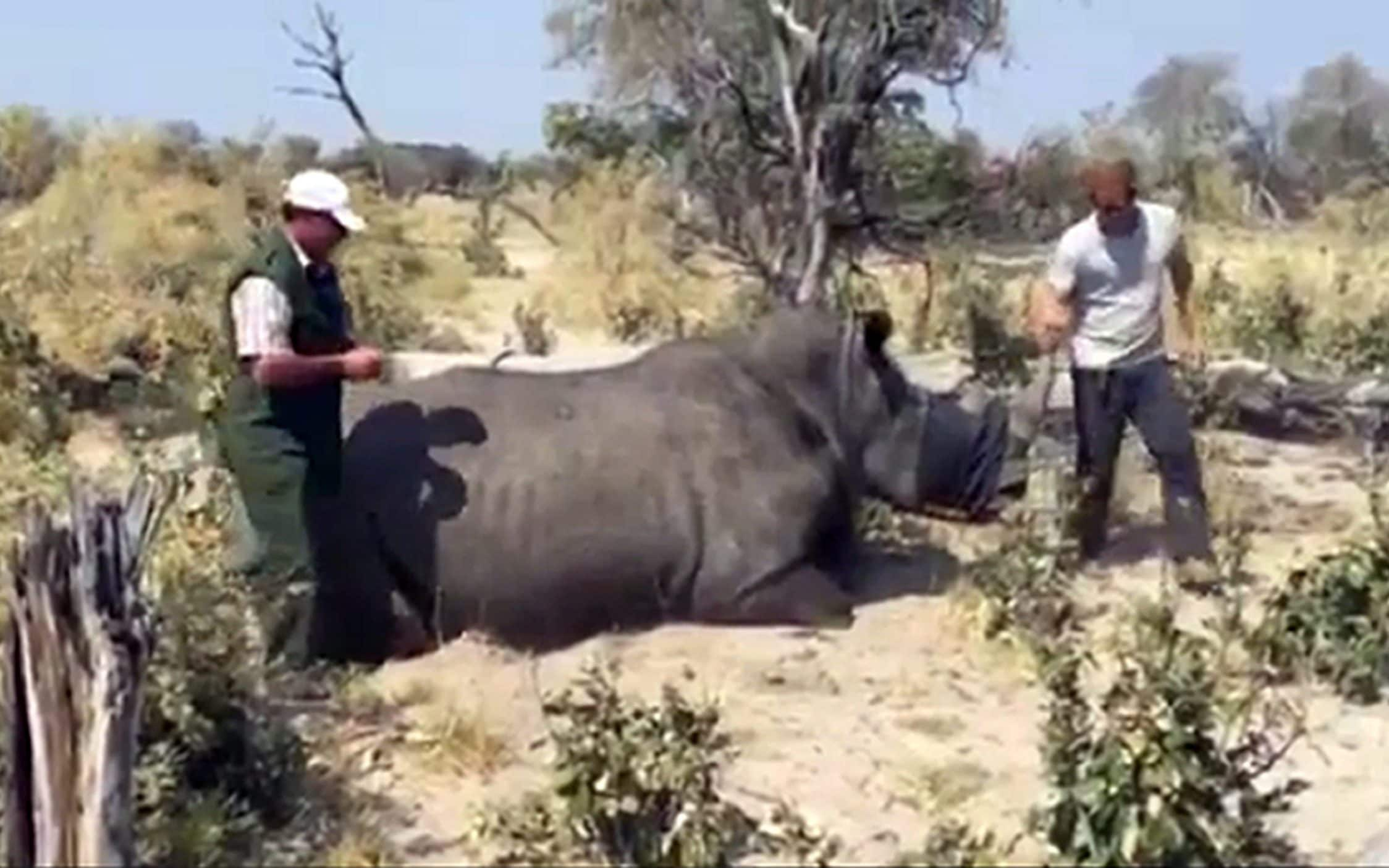 Prince Harry during his visit to southern Africa as he helps sedate a Rhino in Botswana