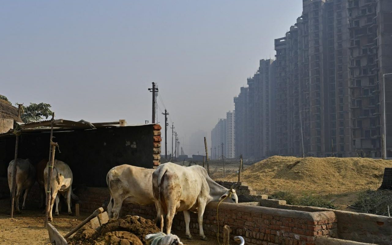 Prisoners To Look After Cattle As India Beefs Up Cow