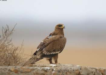 Eagle nearly bankrupts Russian tracking programme with roaming text messages