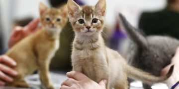 Call to end 'inequality' over cat hit-and-runs