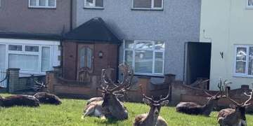 Coronavirus optimistic: good news round-up - deer on our doorsteps