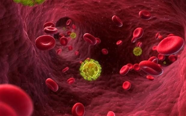 The HIV virus targets immune cells in the bloodstream