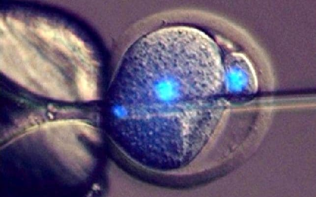 A mouse embryo is fertilised