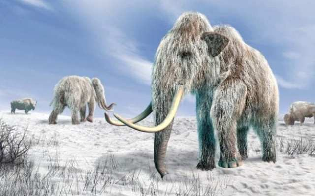 Computer artwork of woolly mammoths and bison in a snow-covered field
