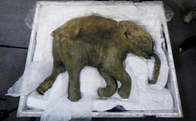 Scientists used DNA from mammoths that were preserved in Arctic permafrost after dying 42,000 years ago