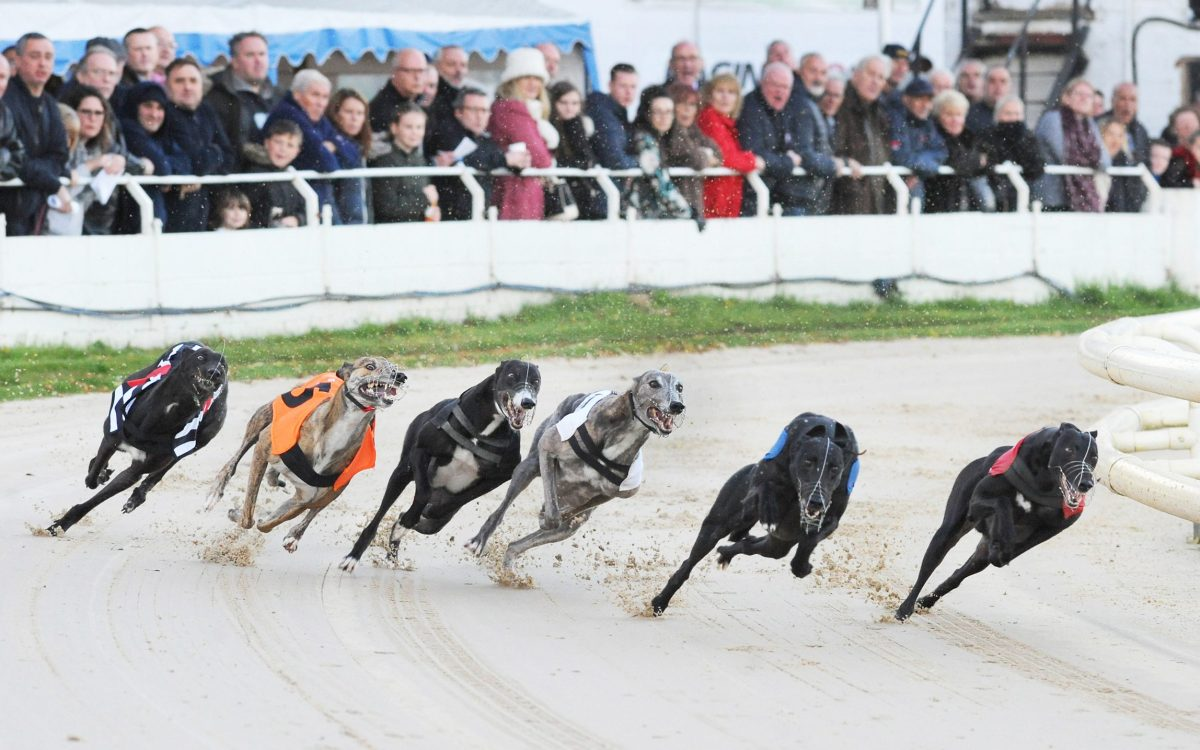 The Hawk Henlow Derby Final: a packed crowd looks on as 8-1 winner Bubbly Turbo (t1) tracks early leader Barstool Trainer (t2) around the first bend followed by Drumcrow Darcy (t3), King Elvis (t4), Dropzone (t5) and Lowgate Ruby (t6)