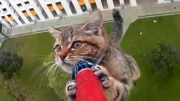 Watch Drone Rescues Terrified Cat Trapped On High Ledge