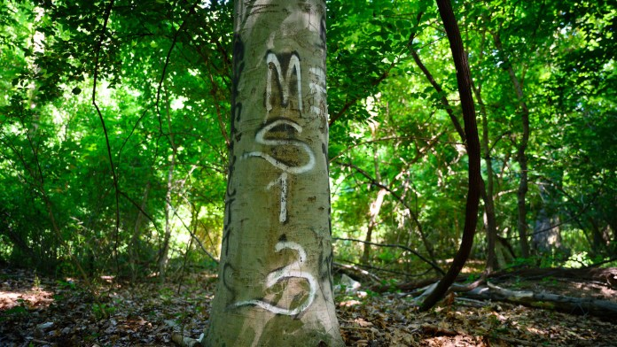 A tree with a gang graffiti in an area of Langley Park (Maryland) that these groups know as