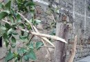 A Nicosia gesto vandalico in via Li Volsi, danneggiati alcuni alberi