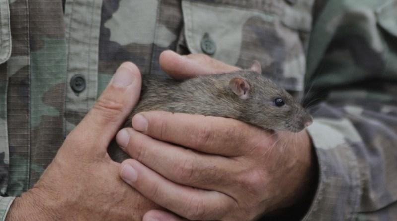 Tóth Gábor solymász egeret és patkányt is vitt a Cseresznyési Családi Napra. Fotó: Molnár Gyula/Paksi Hírnök