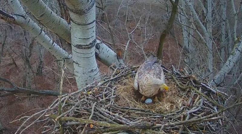 Fotó: Duna-Dráva Nemzeti Park Igazgatóság webkamerája