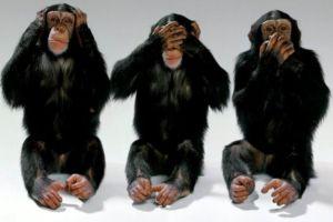 scimmie-tre-12-615x410